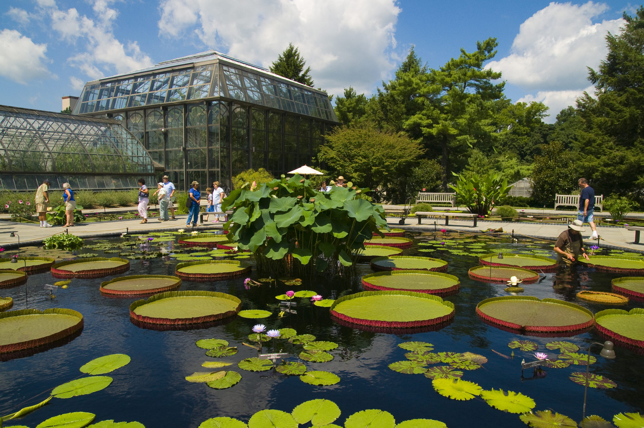 The region's premier horticultural wonderland, Longwood Gardens in Kennett Square, Chester County rambles over 1,050 acres of gardens, woodlands and meadows.